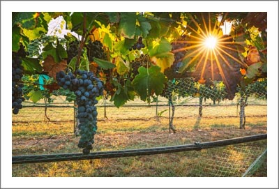 Texas Hill Country Winery and Vineyard For Sale - Texas Hill Country AVA