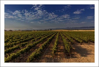 California Vineyard For Sale - 150 Acres - 40 Acre Vineyard - Southern Monterey County Real Estate