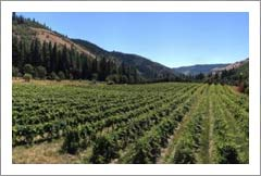 Colubmia Gorge Vineyard For Sale - Washingon Land and Home - Klickitat River Frontage