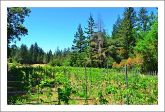 Santa Clara County Winery & Vineyard For Sale