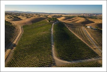 Paso Robles AVA Vineyard & Home For Sale - Horse Property with Wine Country Views