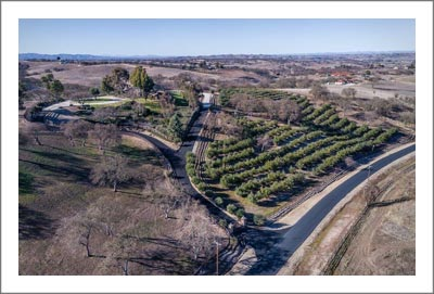 Olive Grove / Orchard For Sale - Paso Robles AVA Olive Grove For Sale - Creston Real Estate