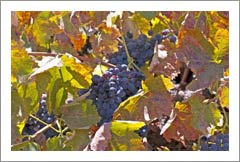 Paso Robles Vineyard For Sale - Highway 46 East - Winery / Tasting Room Potential