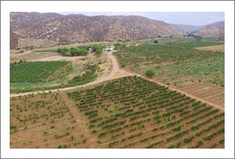 Baja CA, Mexico Ranch, Vineyard, Olive Grove and Bed and Breakfast For Sale