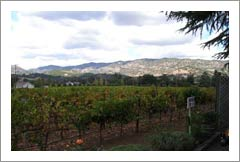 Napa Valley Winery & Vineyard For Sale - Silverado Trail - Napa County, CA Real Estate