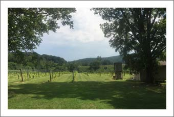 Vineyard For Sale - North Carolina Vineyard w/ Winery Potential For Sale - Cheap Vineyard