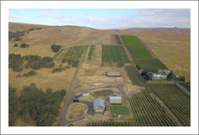 Columbia River Gorge Vineyard For Sale - Oregon Vineyard For Sale - The Dalles - Vintage Wood Barn, Home and Metal Buidling - Winery Potential