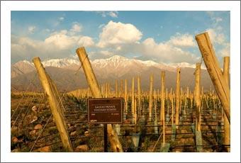 Vineyard For Sale - Argentina Private Vineyard Estate For Sale - Finca Real Estate