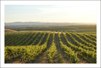 Large Paso Robles Vineyard For Sale - Biodynamic / Organic Farming Practices