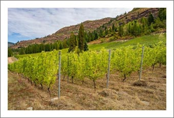 Winery For Sale - British Columbia Winery & Vineyard For Sale - Canada Wine Country Real Estate