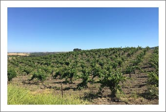 Paso Robles AVA Vineyard and Home For Sale w/ Winemaking Facility - Paso Robles Real Estate