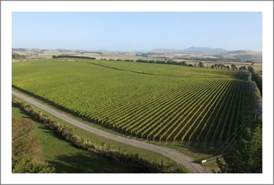 New Zealand Vineyards For Sale