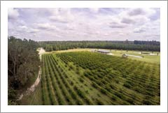 South Carolina Winery, Vineyard, Event Venue, Plantation Style Home For Sale - Wine Country Real Estate