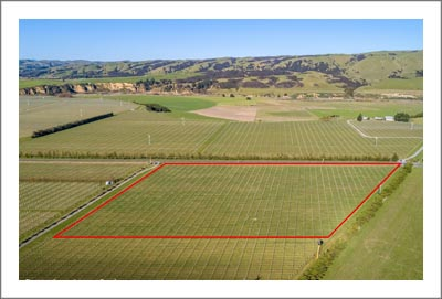 New Zealand Vineyard For Sale - NZ Pinot Noir Vineyard  For Sale