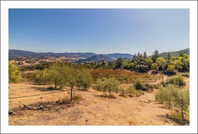 Mendocino Olive Grove / Orchard For Sale w/ Rhone Varietal Vineyard - Hopland Real Estate