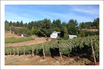 Dundee Hills AVA Vineyard For Sale - Vineyard, Large Home, Winery Site and Equipment For Sale - Wine Country Real Estate