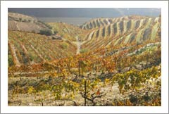 Douro Wine Region, Pinhão, Portugal Winery & Vineyard For Sale - European Wineries For Sale