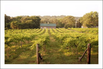 Missouri Winery, Vineyard and Tasting Room For Sale - Wine Business For Sale