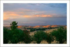 Olive Orchard / Grove For Sale - Paso Robles Area Home & Olive Orchard For Sale - Monterey County