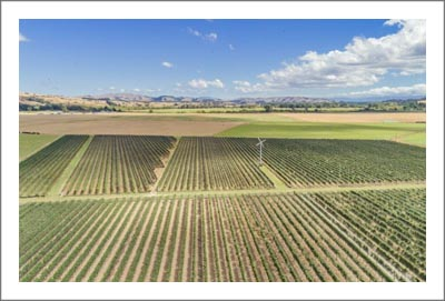 New Zealand Winery & Vineyard For Sale - Vinoptima Estate For Sale - Receivership / Tender Sale