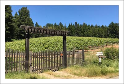 Premier Winery Potential Location - Sonoma County Vineyard For Sale - Sonoma County Wine Country Real Estate