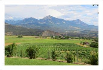 Colorado Winery & Vineyard For Sale - Colorado Wine Country Real Estate