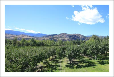 Peach Orchard For Sale - Plum Orchard For Sale - Orchard For Sale in Canada