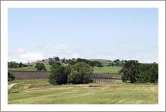 Templeton Vineyard and Land For Sale - Paso Robles AVA