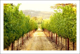 Southern Oregon Winery and Vineyard For Sale - Close to Crater Lake - Agate Ridge Vineyard