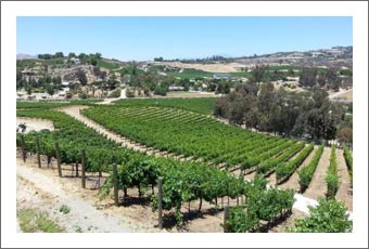 Temecula Valley Vineyard For Sale - Winery Potential - De Portola Wine Trail - InvestorsAlly