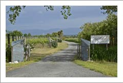 New Zealand Winery,  Vineyard and Home For Sale - Wine Country Home
