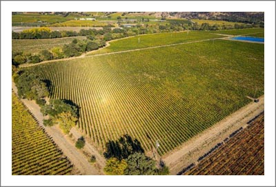 Large Napa Valley Vineyard For Sale - Cabernet Sauvignon