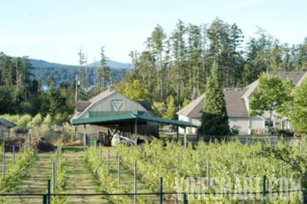 vancouver island bc vineyard and estate home with