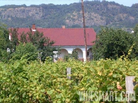 vinesmart somlo hungary vineyard two homes for sale