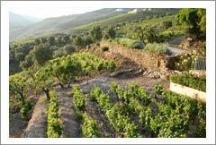 VineSmart - Portugal - Vineyards & Wineries for sale - Wine