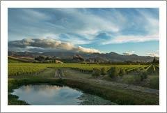 New Zealand Vineyard For Sale - Marlborough, South Island, New Zealand  - Wine Real Estate