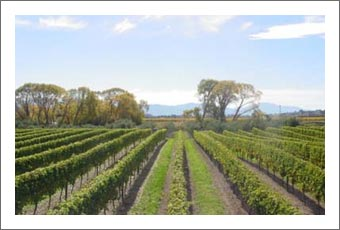 Wineries For Sale - New Zealand Vineyard, Winery, Home, and Olive Grove For Sale - Marlborough, South Island, New Zealand  - Wine Real Estate