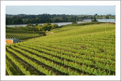 Award Winning Winery, Vineyard, and Home For Sale - Nelson, NZ - Wine Real Estate