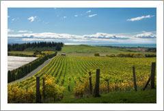 NZ Vineyard & Luxury Lodge Property - Huge Potential - Tiki Tiki Hills, Hawkes Bay, New Zealand - Wine Real Estate