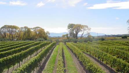 VineSmart - New Zealand Vineyard, Winery, Home, and Olive Grove For Sale - Marlborough, South Island, New Zealand  - Wine Real Estate