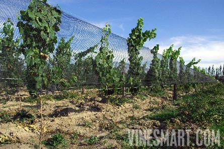 Vineyard Property For Sale In Argentina