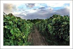 Extraordinary Vineyard and Winery Estate For Sale - Prescott, Arizona - Wine Real Estate