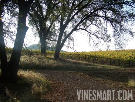 Shingle Springs Winery Vineyard And Home For Sale