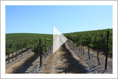 Creston, CA - Wine Grape Vineyard with Home and Shop For Sale - 300 Total Acres - Wine Real Estate