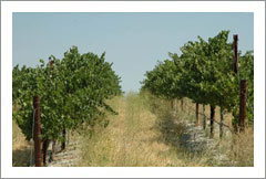 Templeton, CA - Vineyard and Colonial Style Home For Sale - Wine Real Estate