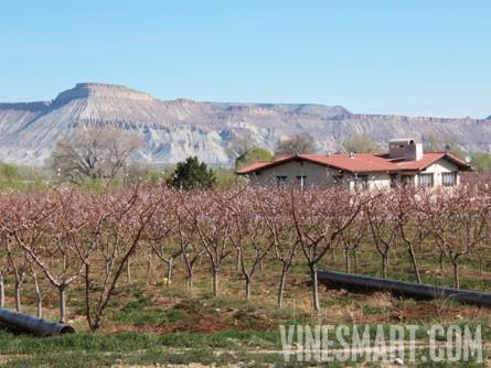 vinesmart palisade colorado vineyard orchard and