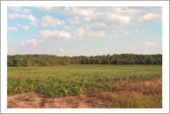New York Vineyard Land For Sale