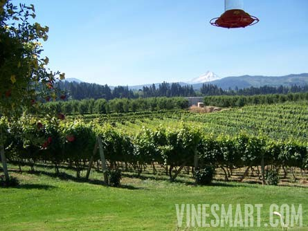 Hood River Oregon Spacious Home Acreage And Vineyard