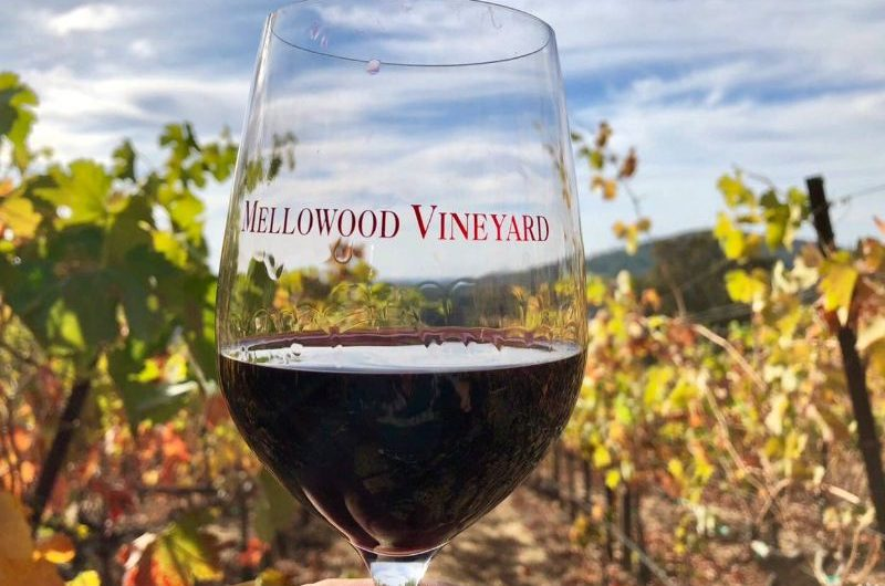 Mellowood Bonded Winery & Tasting Room, Estate Vineyards & Residences for Sale