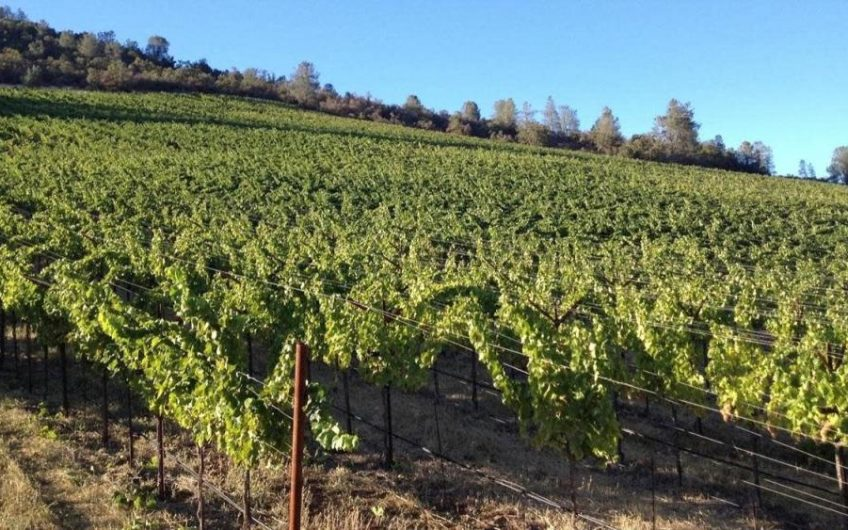Lake County Vineyard For Sale – Madder Lake Vineyard